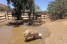 Farm Sanctuary Animal Acres