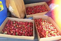 Graysmarsh Berry Farm, Sequim, United States