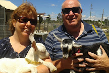 Jannei Goat Dairy, Lithgow, Australia