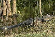 Jungle Jim's Safari, Goodland, United States