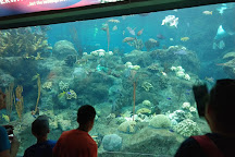 The Florida Aquarium, Tampa, United States
