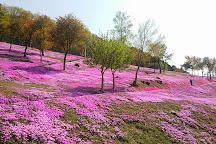 Shibazakura Takinoue Park, Takinoue-cho, Japan