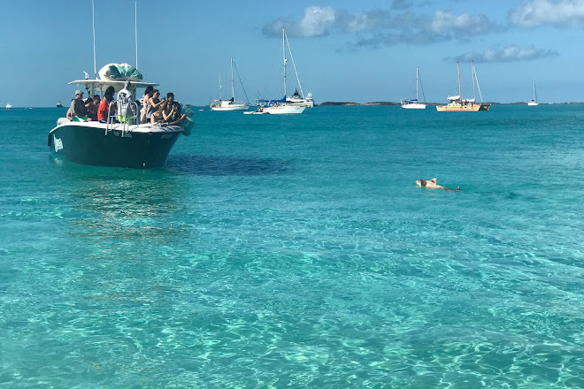 Visit Pig Beach - Big Major Cay on your trip to Staniel Cay