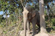 Maerim Elephant Sanctuary, Mae Rim, Thailand