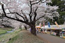 Sakura Trees Along Kannonji River, Inawashiro-machi, Japan