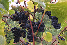 Mackinaw Trail Winery & Brewery, Petoskey, United States