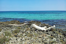 Torre Guaceto Marine Protected Area, Carovigno, Italy