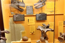 University of Michigan Museum of Natural History, Ann Arbor, United States
