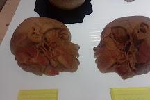 The Human Body Museum, Bangkok, Thailand