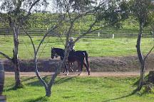 Harewood Estate Winery, Denmark, Australia
