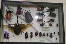 Insectarium de Lizio, Lizio, France
