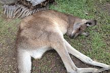 Kuranda Koala Gardens, Kuranda, Australia