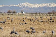 Monte Vista National Wildlife Refuge, Alamosa, United States