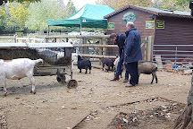 Buttercups Sanctuary for Goats, Boughton Monchelsea, United Kingdom