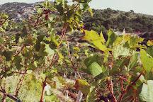 Wine Tasting Brac & Olive Oil Brac, Nerezisca, Croatia