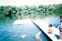 Delfinario, Varadero, Cuba