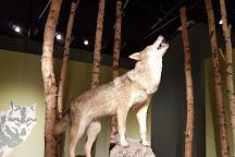 Wolfcenter Dorverden, Doerverden, Germany