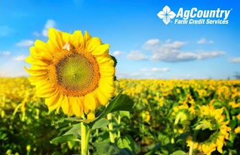 AgCountry Farm Credit Services Payday Loans Picture