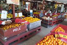 Pell's Citrus & Nursery, Osteen, United States