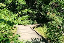 Busey Woods, Urbana, United States