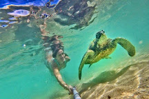 Hawaii Turtle Tours, Honolulu, United States