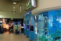 Hekinan Seaside Aquarium - Hekinan Youth Maritime Science Museum, Hekinan, Japan