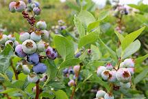 Beck Brothers blueberries U-Pick, Windermere, United States