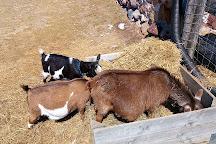Haute Goat, Port Hope, Canada