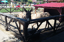Ferma Animalelor, Pantelimon, Romania
