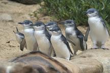 Wildlife Tours Australia, Melbourne, Australia