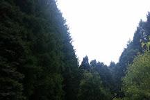 The Redwoods, Beech Forest, Australia