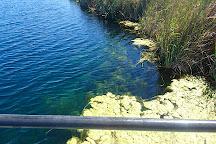 Piccaninnie Ponds Conservation Park, Mount Gambier, Australia