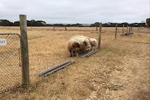 Island Pure Sheep Dairy, Kangaroo Island, Australia