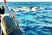 Manly Ocean Adventures, Manly, Australia