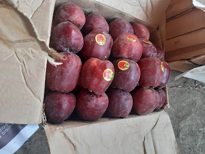 Khurssan Mungal Fruits Company