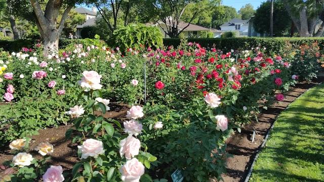 Pasadena Tournament of Roses