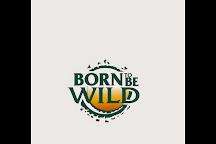 Born To Be Wild, Marbella, Spain