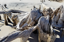 Forgotten Coast Paddlesports, Carrabelle, United States