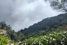 Bosque El Pital, Chalatenango Department, El Salvador