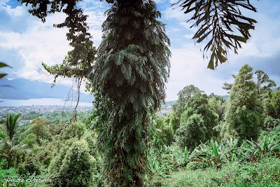 Parks Moya Mabuku