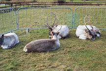 Ythanbank Reindeer, Ellon, United Kingdom