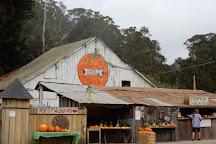 Arata Pumkin Farm, Half Moon Bay, United States