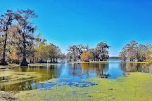 Cajun Country Swamp Tours, Breaux Bridge, United States