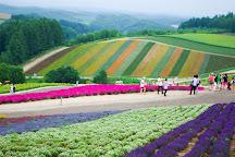 Farm Tomita, Nakafurano-cho, Japan