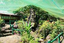 Butterfly Sanctuary at Mambukal Resort, Bacolod, Philippines