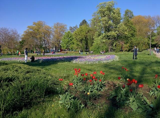 Parcul Regele Mihai I