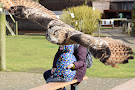 Raptor Foundation