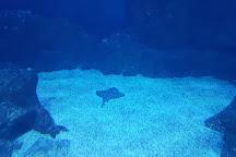 National Marine Aquarium, Plymouth, United Kingdom