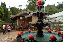Genting Strawberry Leisure Farm, Genting Highlands, Malaysia