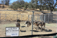 Indian Point Ostrich Ranch, Tehachapi, United States